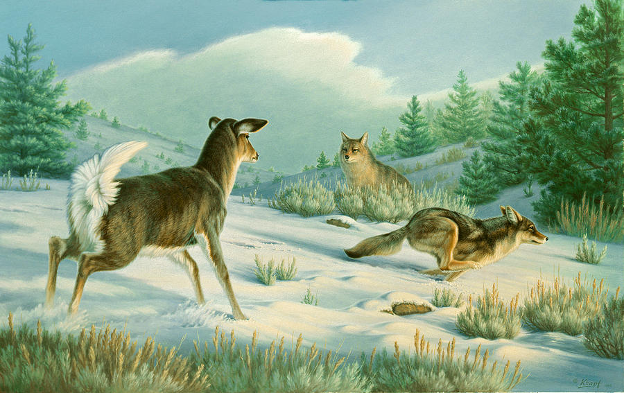 Wildlife Painting - Stand-off  -whitetail Doe And Coyotes by Paul Krapf