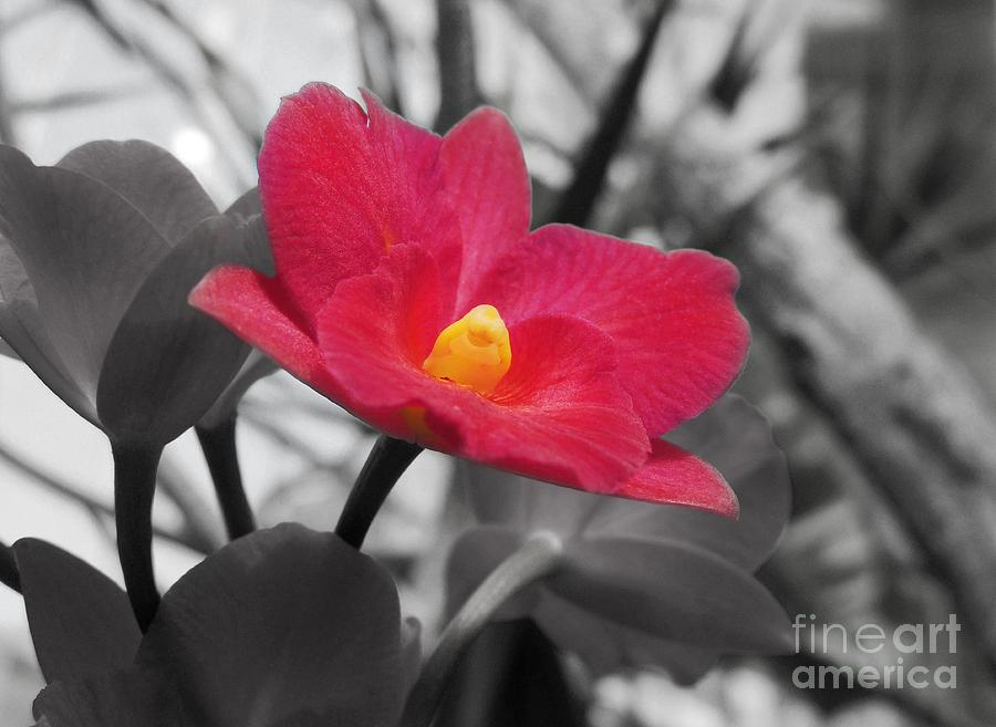 Stand Out Beauty Photograph - Stand Out Beauty by Kristine Merc