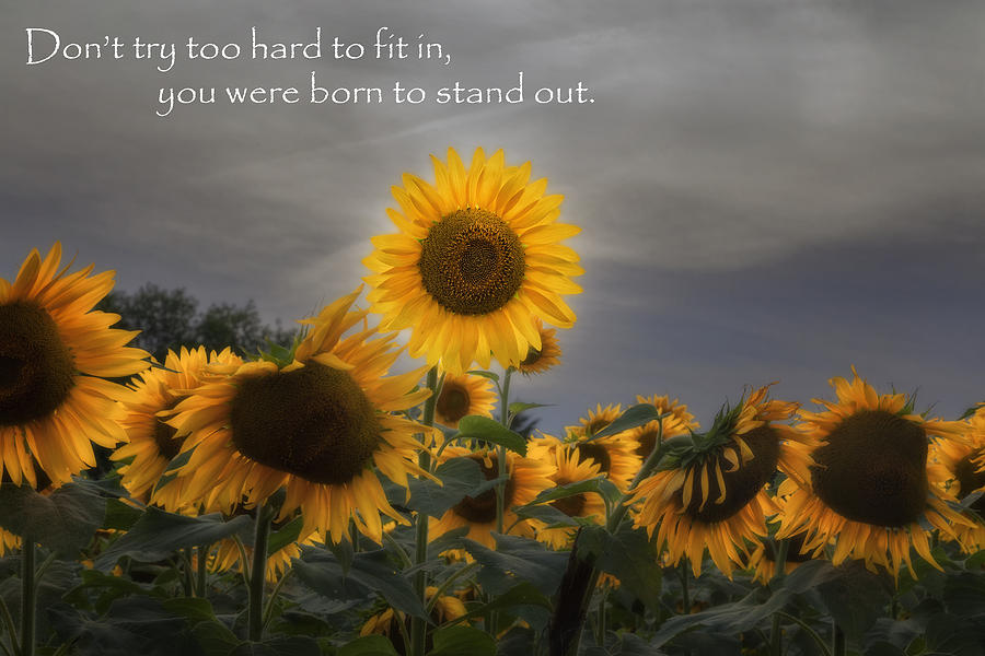 Motivational Photograph - Stand Out by Bill Wakeley