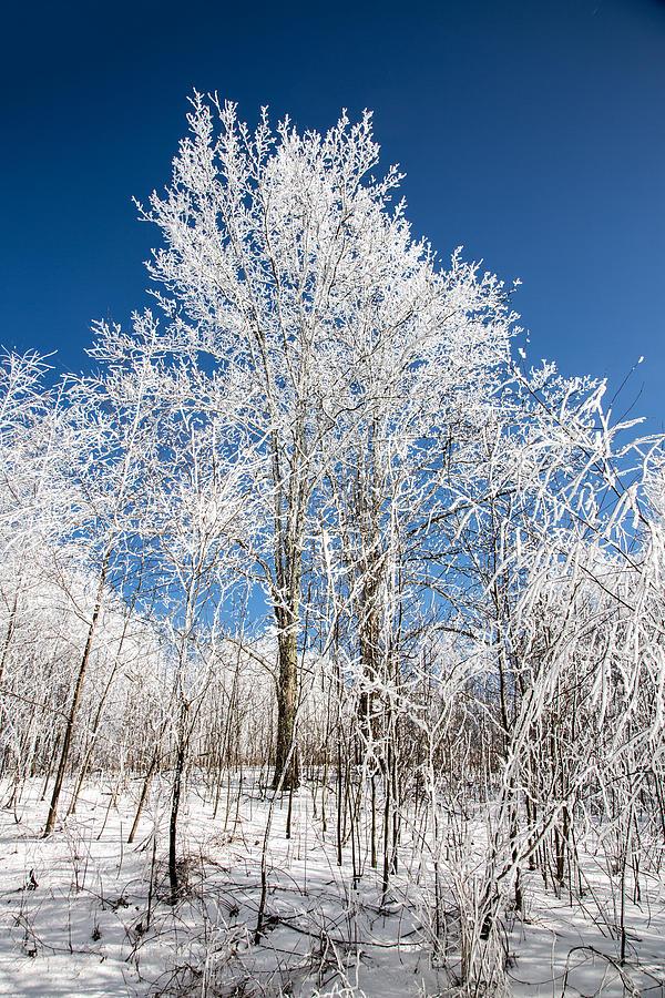Snow Photograph - Stand Tall by John Haldane