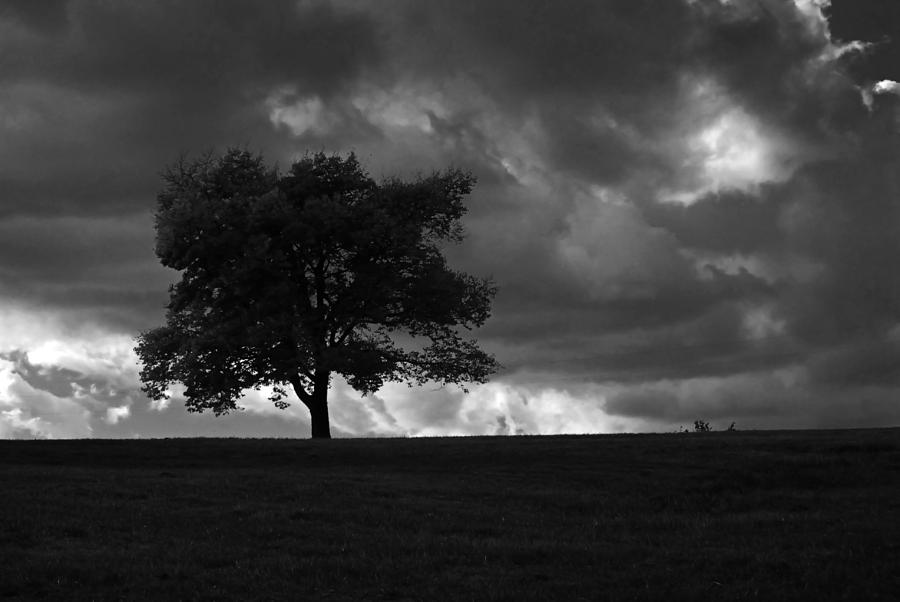 Landscape Photograph - Standing Alone by Lena Wilhite