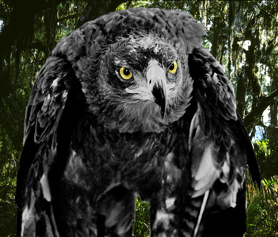 Eagle Digital Art - Standing Eagle by Fred Leavitt