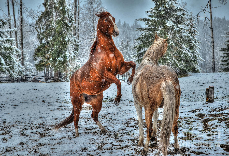Horse Photograph - Standing In The Snow by Skye Ryan-Evans
