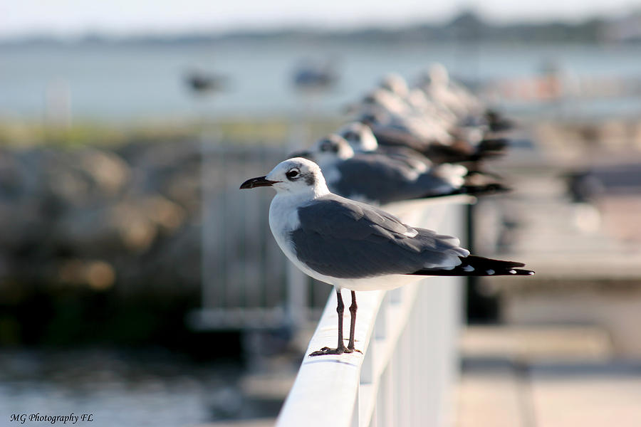 Seagull Photograph - Standing Out by Marty Gayler