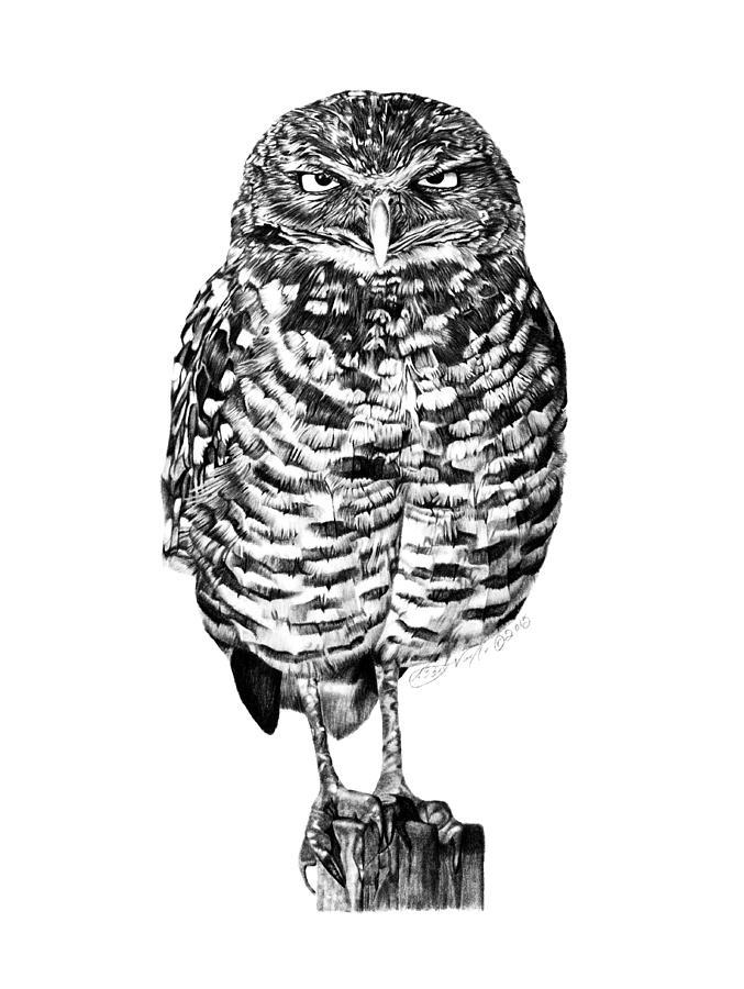 041 - Owl with Attitude by Abbey Noelle