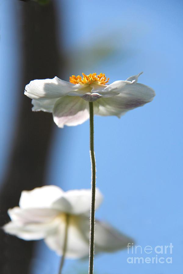 White Flower Photograph - Standing Proud by Karin Ubeleis-Jones