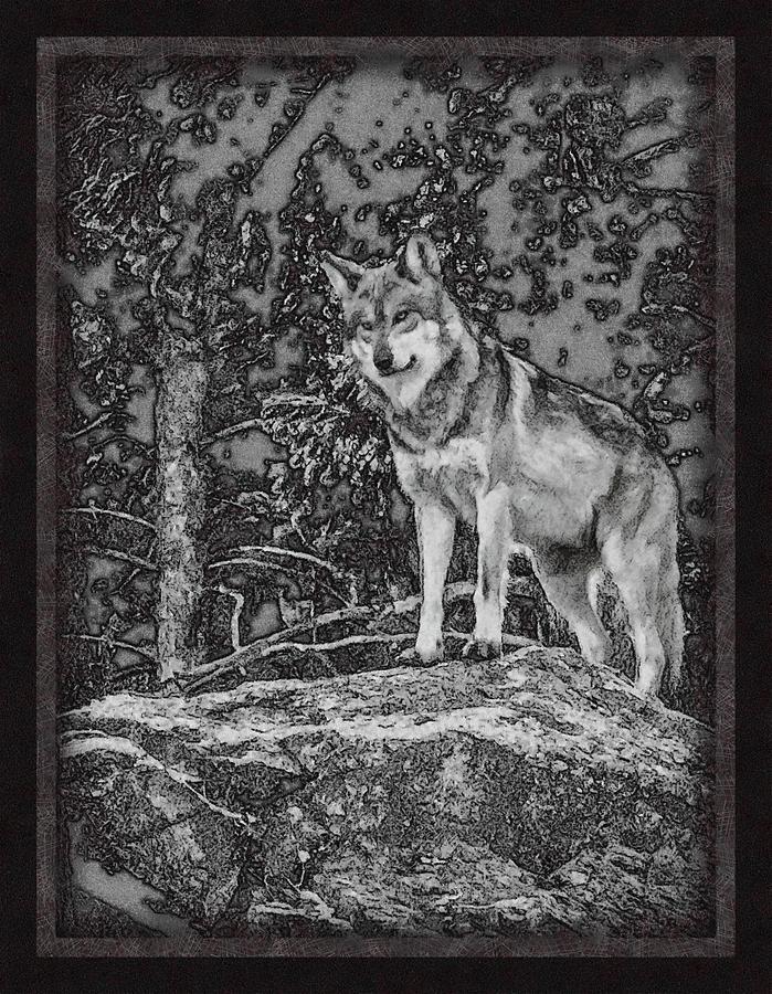 Wolf Digital Art - Standing Tall by Ernie Echols