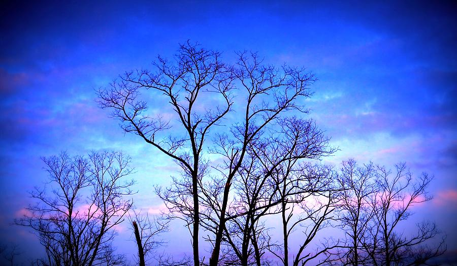 Trees Photograph - Standing Tall by Jose Lopez