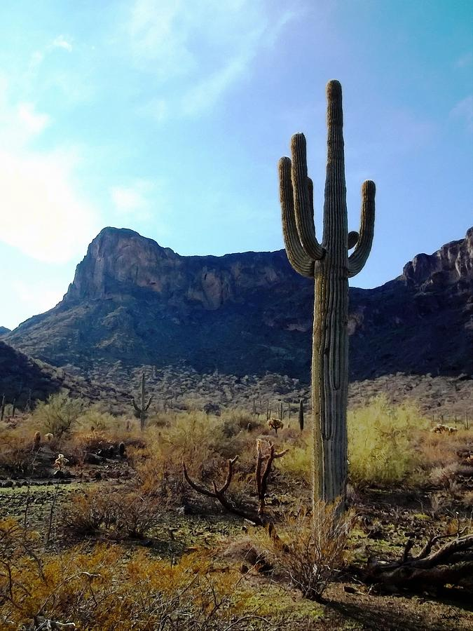 Saguaro Photograph - Standing Tall - Saguaro by Glenn McCarthy Art and Photography