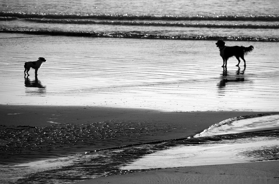 Standoff At The Beach by Aidan Moran
