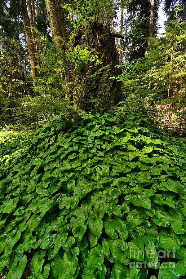 Spring Time Photograph - Stanley Park In Spring Time by Terry Elniski