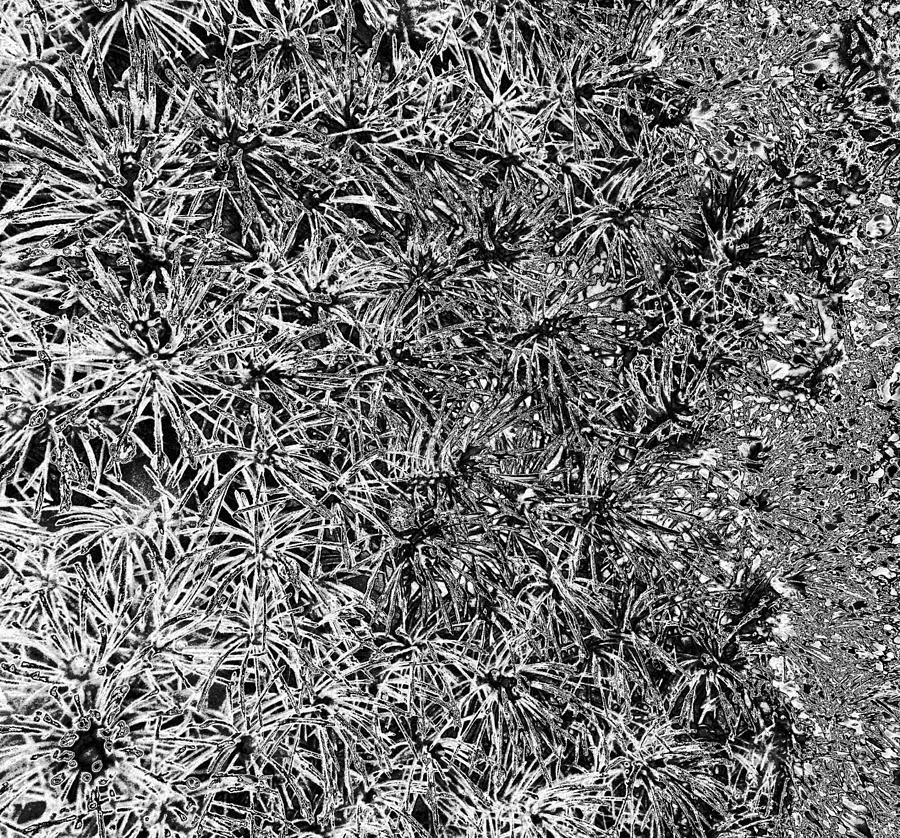 Abstract Photograph - Starburst Abstract In Bw by Seth Shotwell