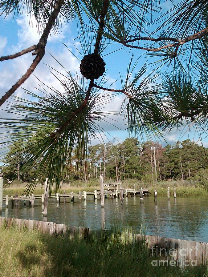Pine Cone Photograph - Starburst Pines by Katie Adkins