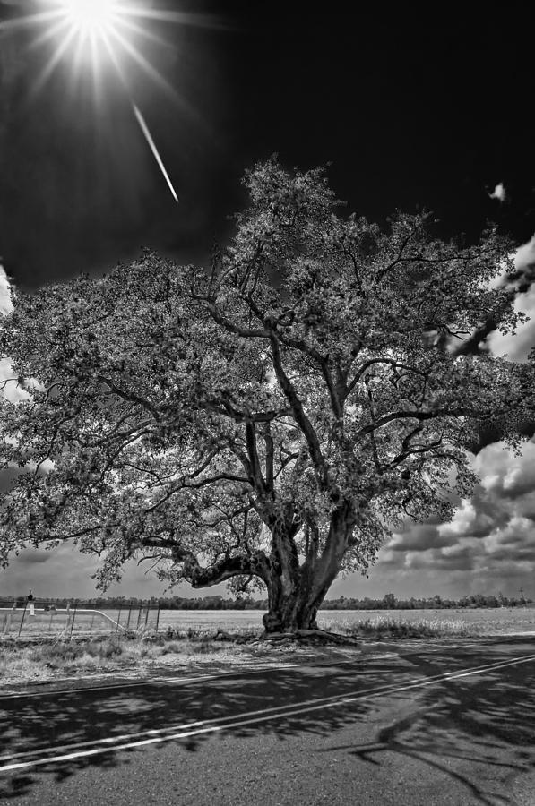New Orleans Photograph - Stardom Bw by Steve Harrington