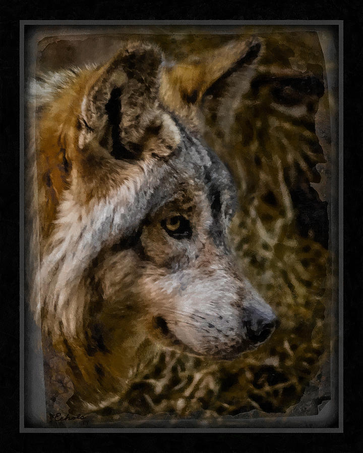 Wolf Digital Art - Stare Of The Wolf by Ernie Echols