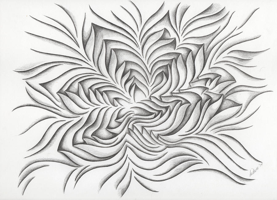 Drawing Drawing - Starfish - 41 by Diana Durr