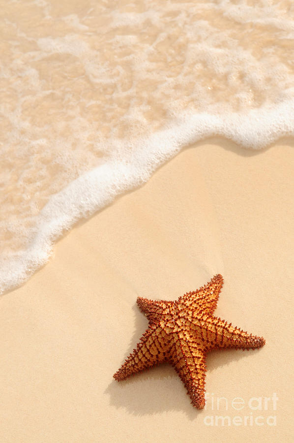 Starfish And Ocean Wave Photograph