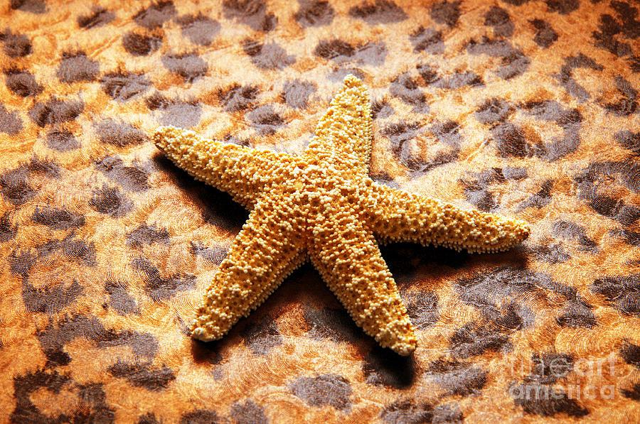 Starfish Photograph - Starfish Enterprise by Andee Design