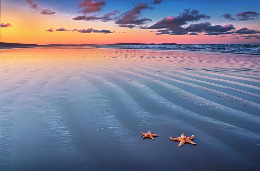 Starfish On Sand Photograph by Joe Regan