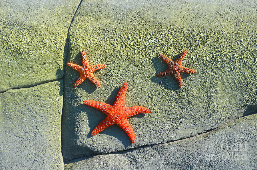 Starfish Photograph - Starfish On The Rocks by Luther Fine Art