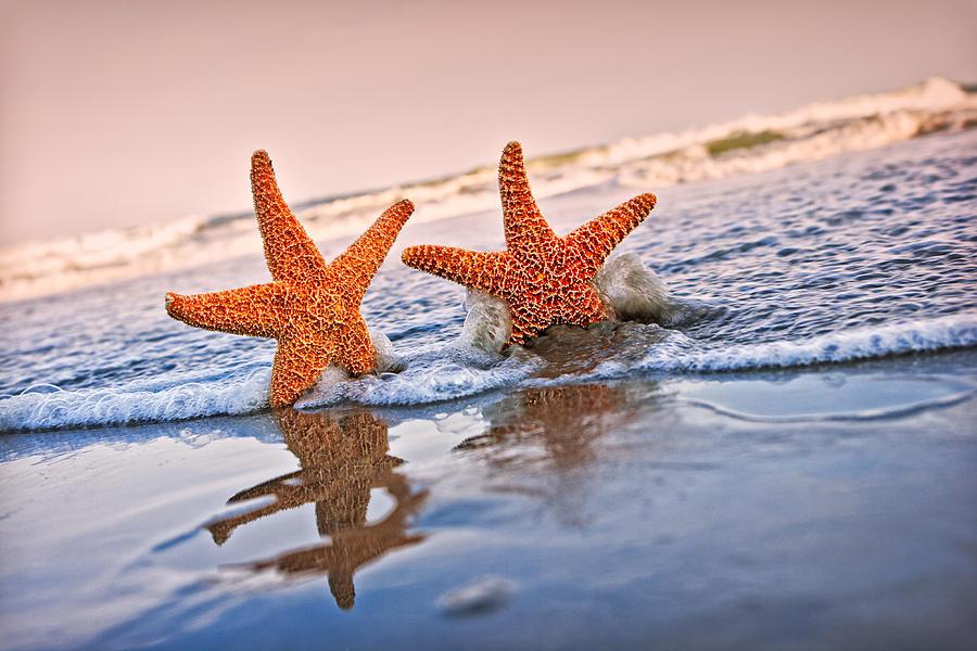 Ocean Photograph - Starfish on Vacation 1 by William Britten