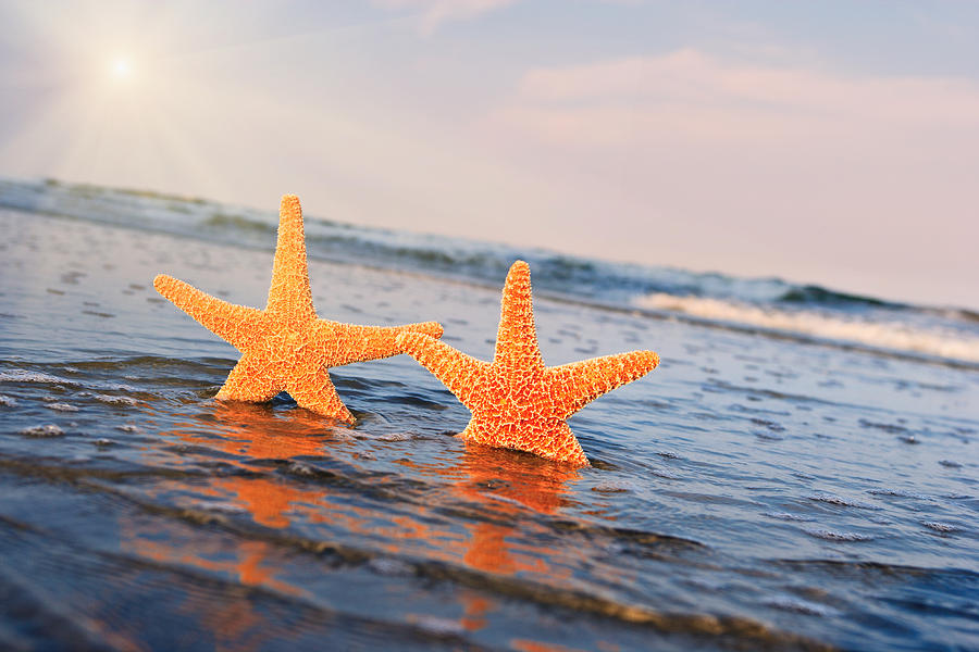 Ocean Photograph - Starfish on Vacation 2 by William Britten