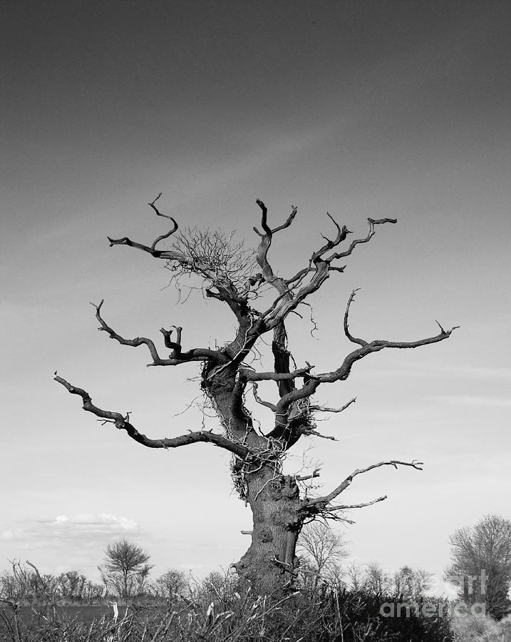 Landscape Photograph - Stark Tree by Pixel Chimp