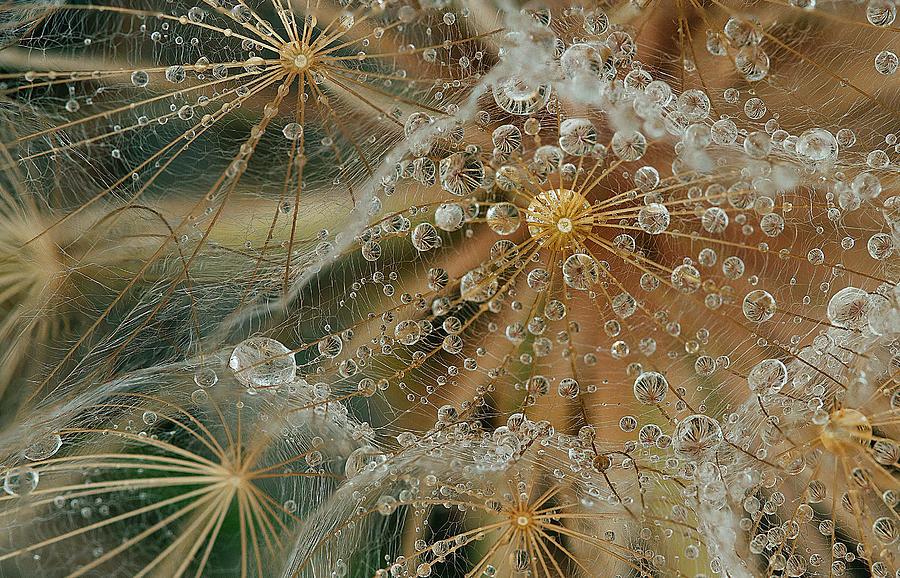 Drops Photograph - Starless by El Fil?sofo