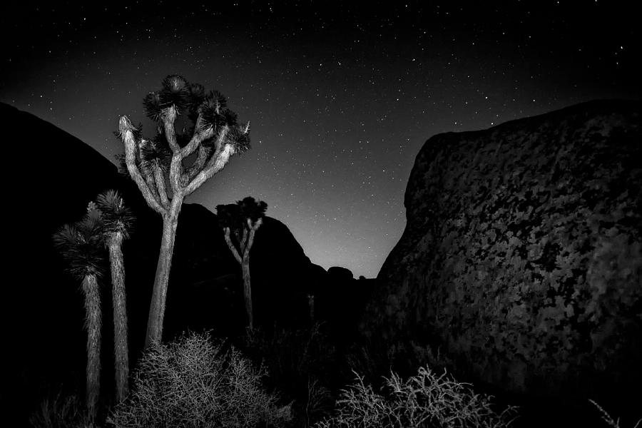 Black & White Photograph - Stars Above Joshua Tree by Peter Tellone