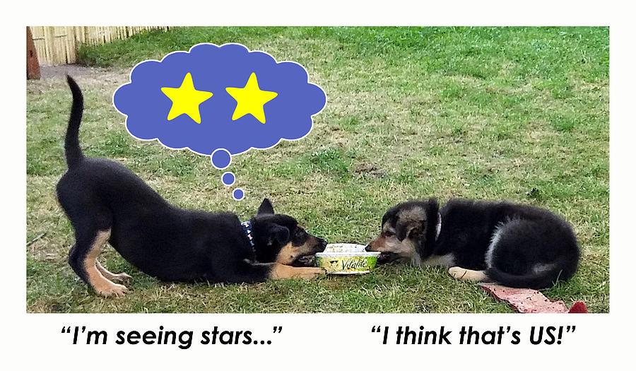 Dog Digital Art - Stars by Clif Jackson