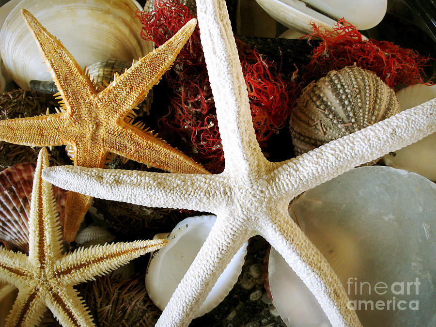 Starfish Photograph - Stars Of The Sea by Colleen Kammerer