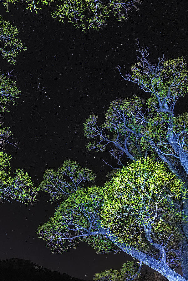 Night Sky Photograph - Stars Out Tonight by Nancy Marie Ricketts