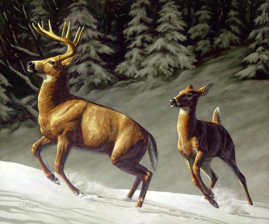 Deer Painting - Startled - Variation by Crista Forest
