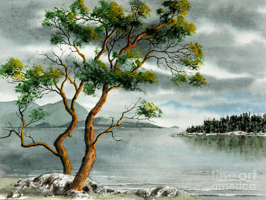 Watercolour Painting - Stately Arbutus by Frank Townsley