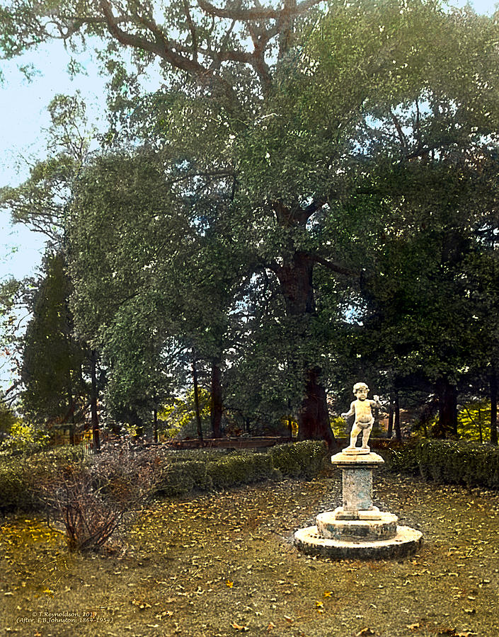 Tranquil Photograph - Statue And Tree by Terry Reynoldson