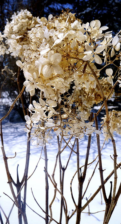Beauty Photograph - Stay Close Stay Warm by Danielle  Broussard