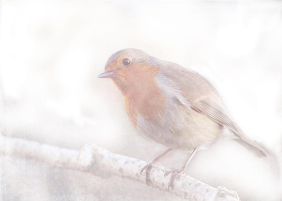 Robin Digital Art - Stay little cheerful Robin by Sarah Vernon