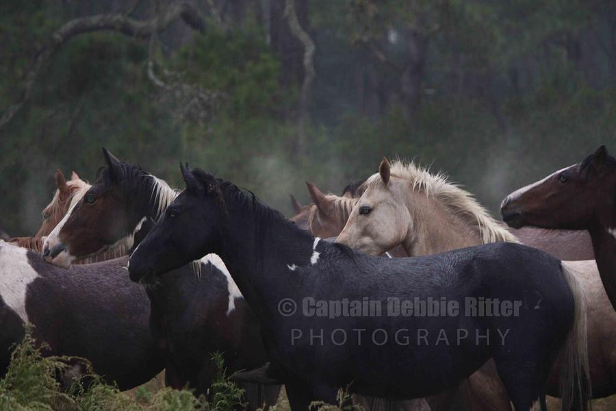 Horse Photograph - Steam In The Rain by Captain Debbie Ritter
