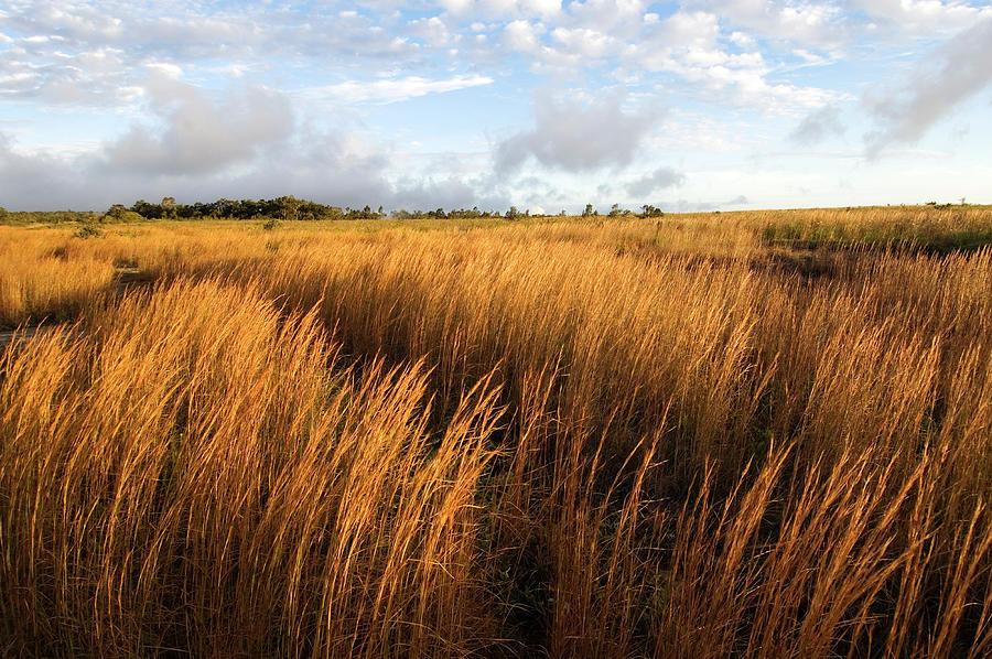 Steaming Bluff Landscape Photograph by John Elk