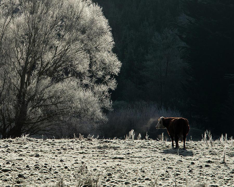Steaming Photograph by Nzpix