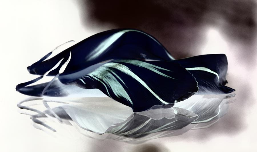 Tulip Photograph - Steel Black And Blue Petals by Andrea Lazar