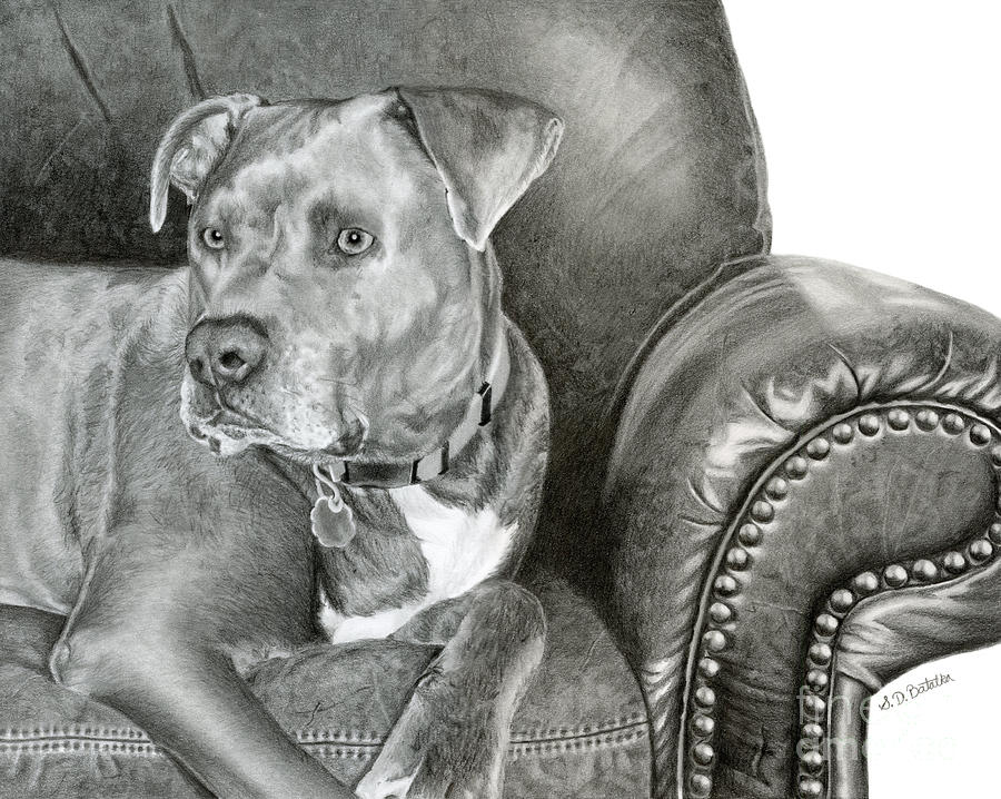 Dog Portrait Drawing - Leather And Steel by Sarah Batalka