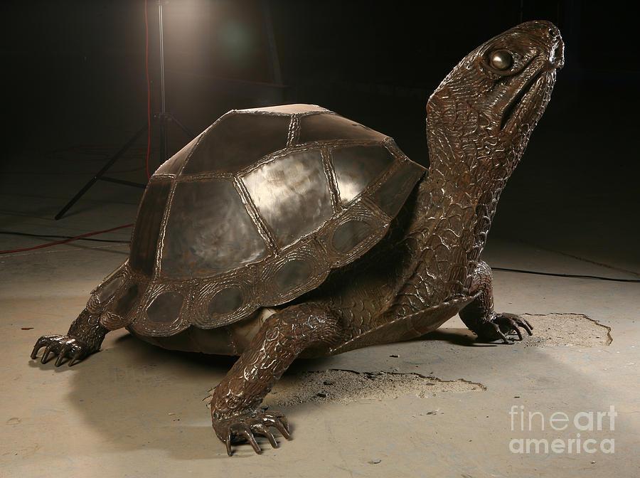 Steel sculpture realism expressionism turtle turtleback