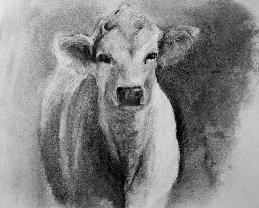 Steer Drawing From Life Drawing By Michele Carter