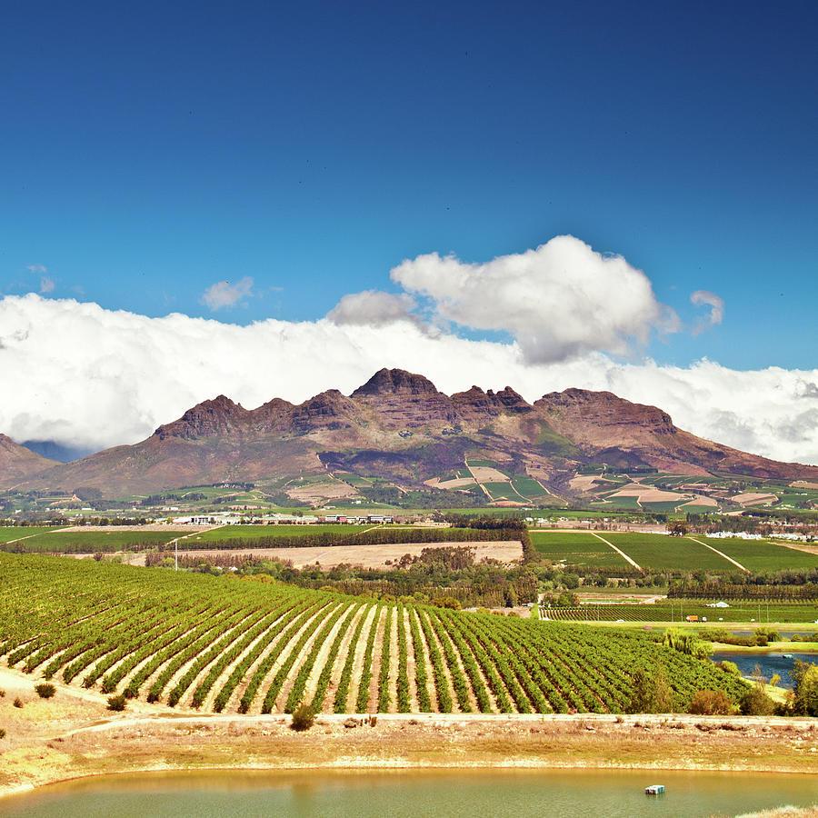 Stellenbosch Vineyards Photograph by Ferrantraite