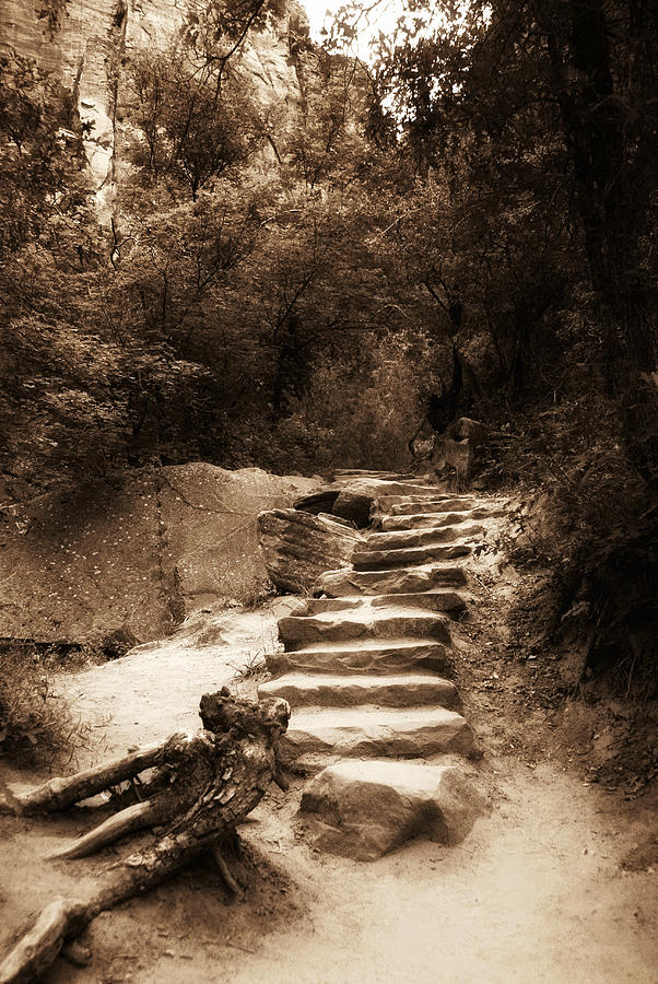 Sepia Photograph - Step Into Nature by Aron Kearney