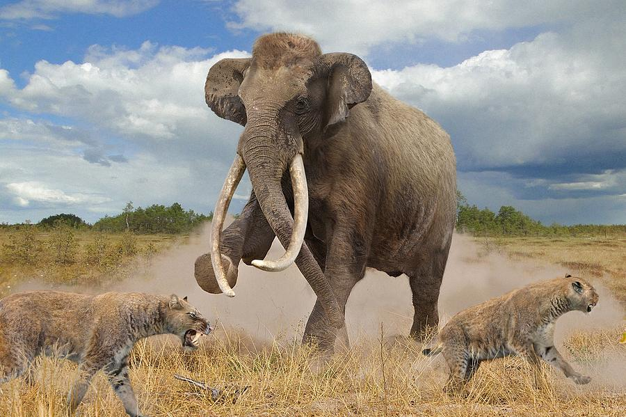 Proboscideans Photograph - Steppe Mammoth by Roman Uchytel/science Photo Library
