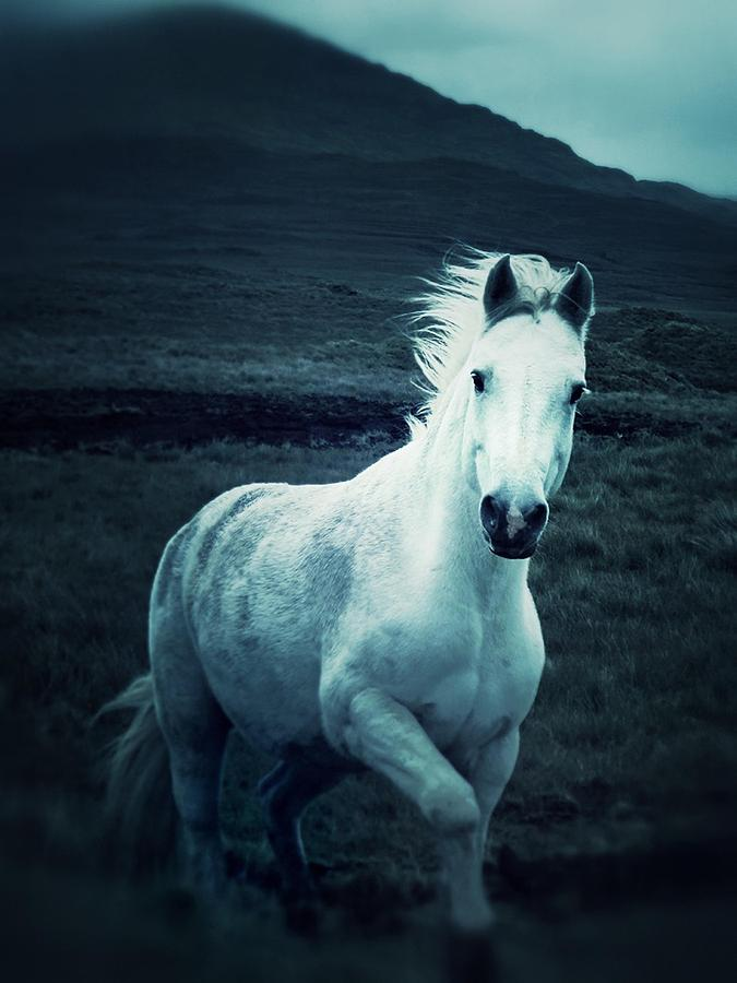 White Horse Photograph - Stepping Into The Light by The Art With A Heart By Charlotte Phillips