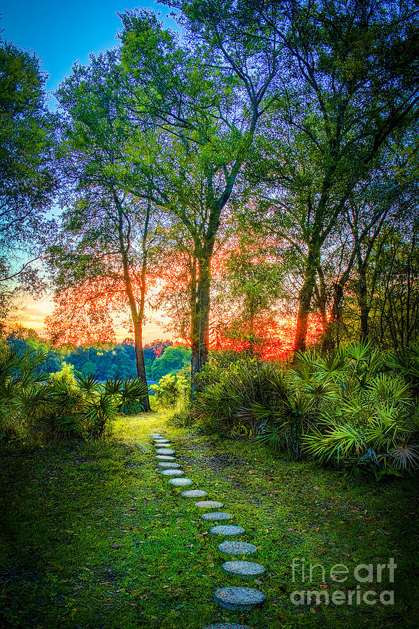Stepping Stones Photograph - Stepping Stones To The Light by Marvin Spates