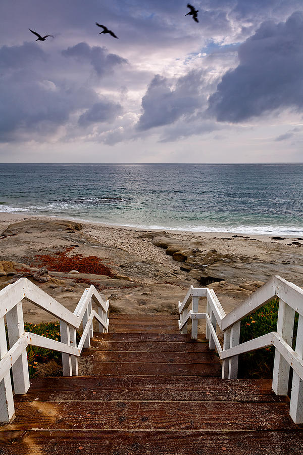 Beach Photograph - Steps And Pelicans by Peter Tellone